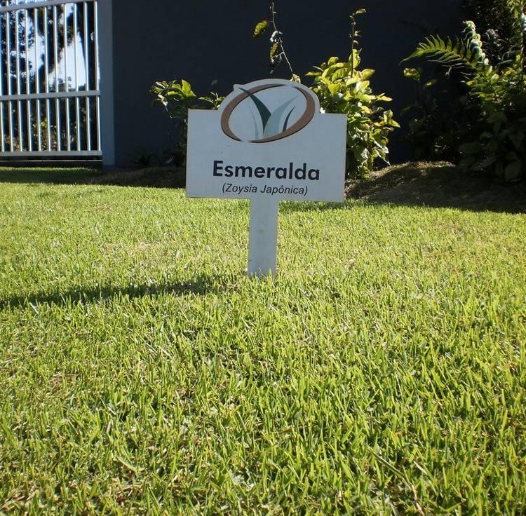 Grama Esmeralda (Zoysia Japônica)